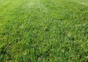 Aeration and Seeding – Pro Grass Lawn Care